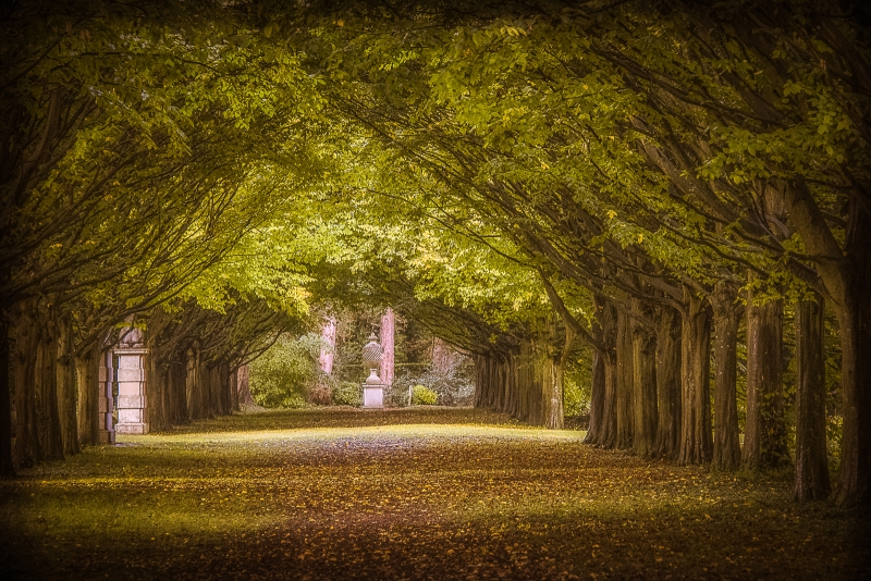 Pauline Griggs-Anglesey Abbey Avenue