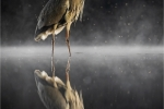 Kevin Pigney - HERON NIGHT REFLECTION