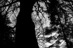 Svetlana Wright - TREE