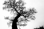 Viv Houghton - LONELY TREE