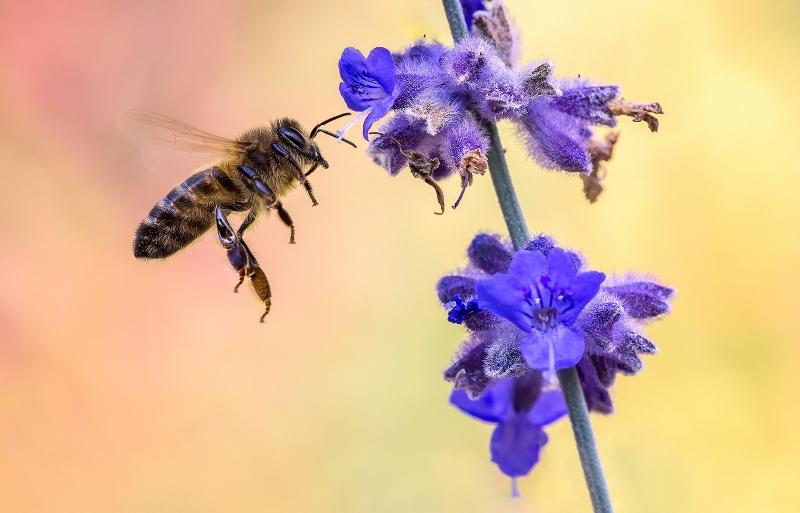 Ryan Bailey - Busy Bee