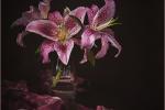 Oriental Lilies - Sharon Powell