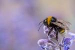 BUMBLE BEE - Bruce Liggitt