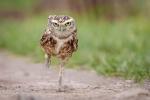 Kevin Pigney - Owl Running