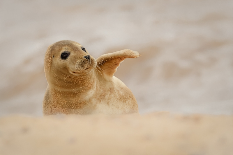YOUNG SEAL - Kevin Pigney