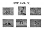 HARES HAVIN FUN - Nick Bowman