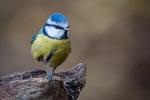 Balancing Blue - Bruce Liggitt