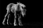 The sad foal - Ryan Bailey