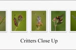 Critters Close Up - Kevin Pigney
