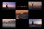 Up with the Lark - Glynis Pierson