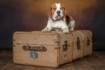 Kevin Pigney-GEORGE PACKED N READY