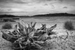 Pauline Griggs - Benacre beach