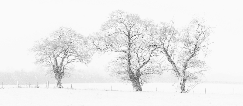Viv Houghton-Snowfall