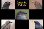 Garden Bird Portraits panel - Bruce Liggitt